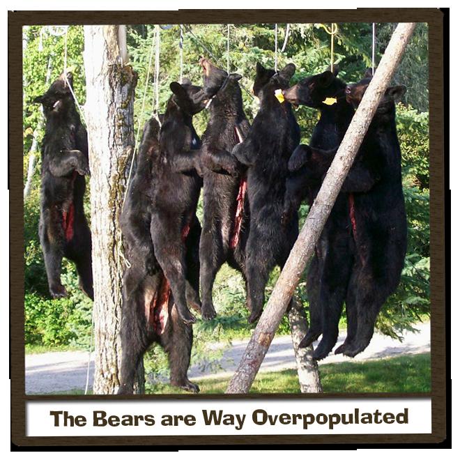 Ontario Fly-in Black Bear Hunting